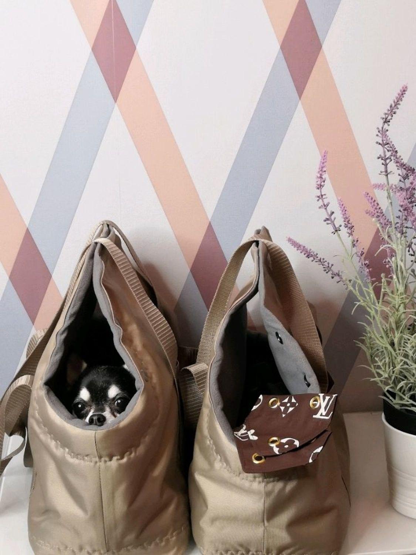Фото №1 к отзыву покупателя Марина Канева «Шерстяные милахи» о товаре Сумка-переноска Любимчик