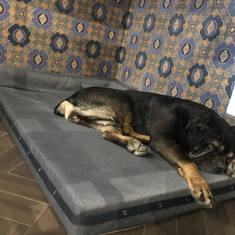 Фото №1 к отзыву покупателя Максим о товаре Софа Модерн для крупных собак