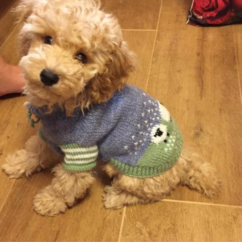 Фото №1 к отзыву покупателя Annushka о товаре Свитер вязаный для маленькой собачки. Ручная работа.