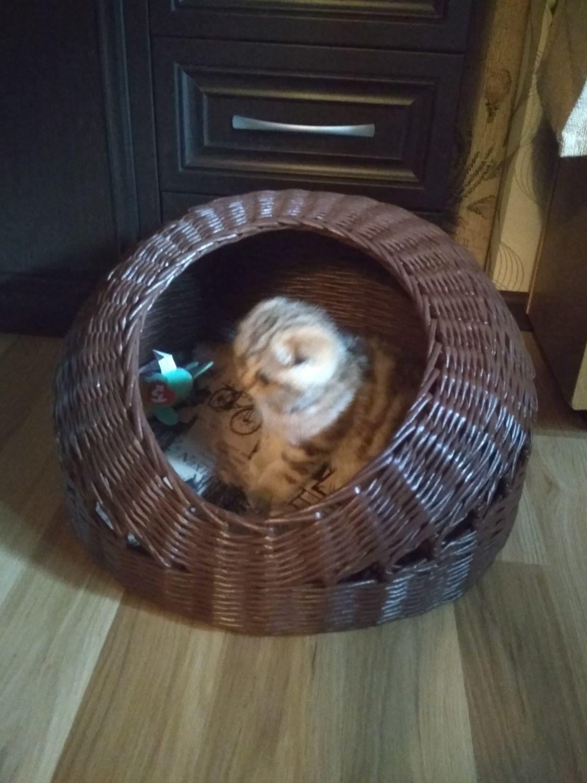 Фото №1 к отзыву покупателя Елена о товаре Домик для маленькой собачки