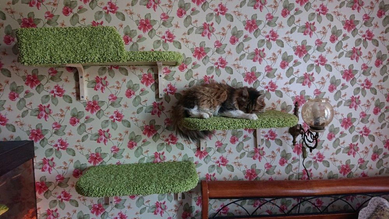 """Photo №1 к отзыву покупателя Vera Surovtseva о товаре Настенный домик """"Эверест"""" (подходит крупным кошкам). Заказать в размер"""