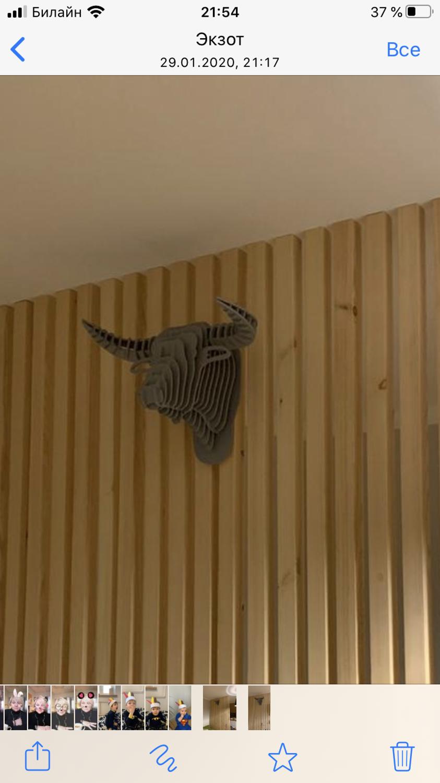 Photo №1 к отзыву покупателя Denis о товаре Голова Буйвола