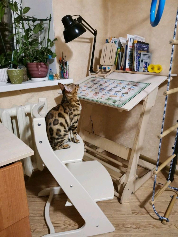 Фото №2 к отзыву покупателя Зинаида Саморукова о товаре Стулья: Растущий стул