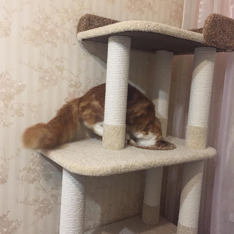 Photo №1 к отзыву покупателя Pavel о товаре Высокий домик для кошки купить. Подходит крупной кошке