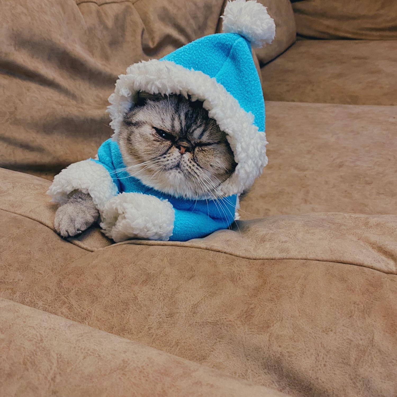 """Photo №1 к отзыву покупателя Aniskina Mona о товаре Костюм """"Снегурочка"""" для кошек и собак"""