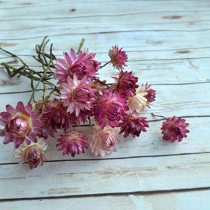 Сухоцветы для букетов и декора