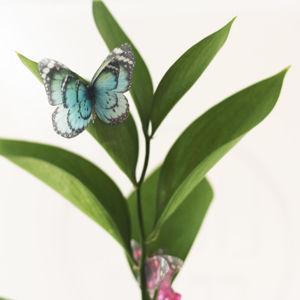 Бабочки и крылья