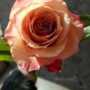Полноразмерные цветы