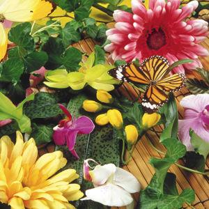 Цветы, цветочки и бабочки