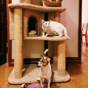 Комплексы, когтеточки для кошек.