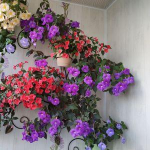 Настенные подставки для цветов