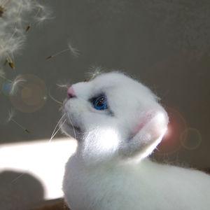 Кошкин мир