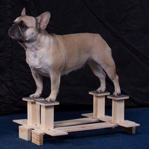 Тренажер для стойки собак