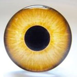 14мм глазки стеклянные