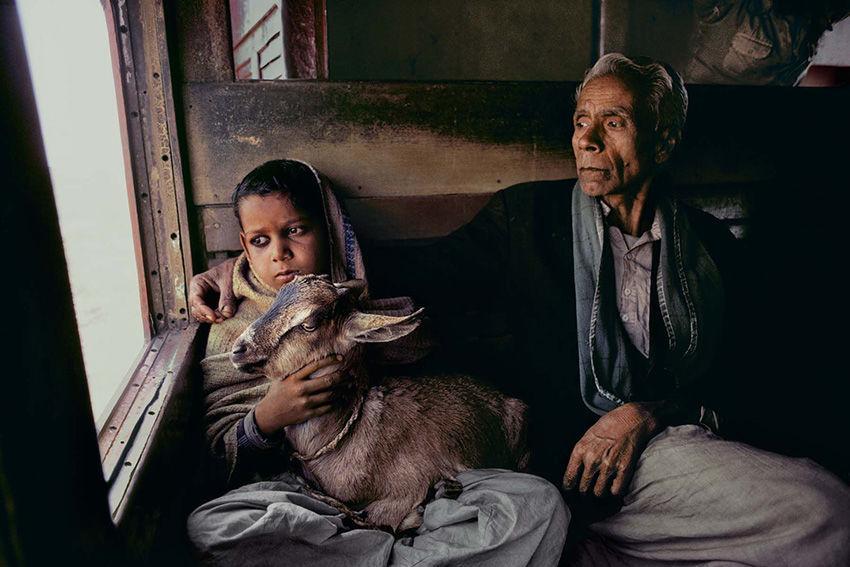 Мы с тобой одной крови 35 невероятных кадров из жизни людей и животных от легендарного фотографа Стива МакКарри, фото № 33