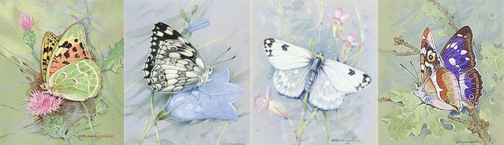 Мир Бабочек Бенингфилда, фото № 31