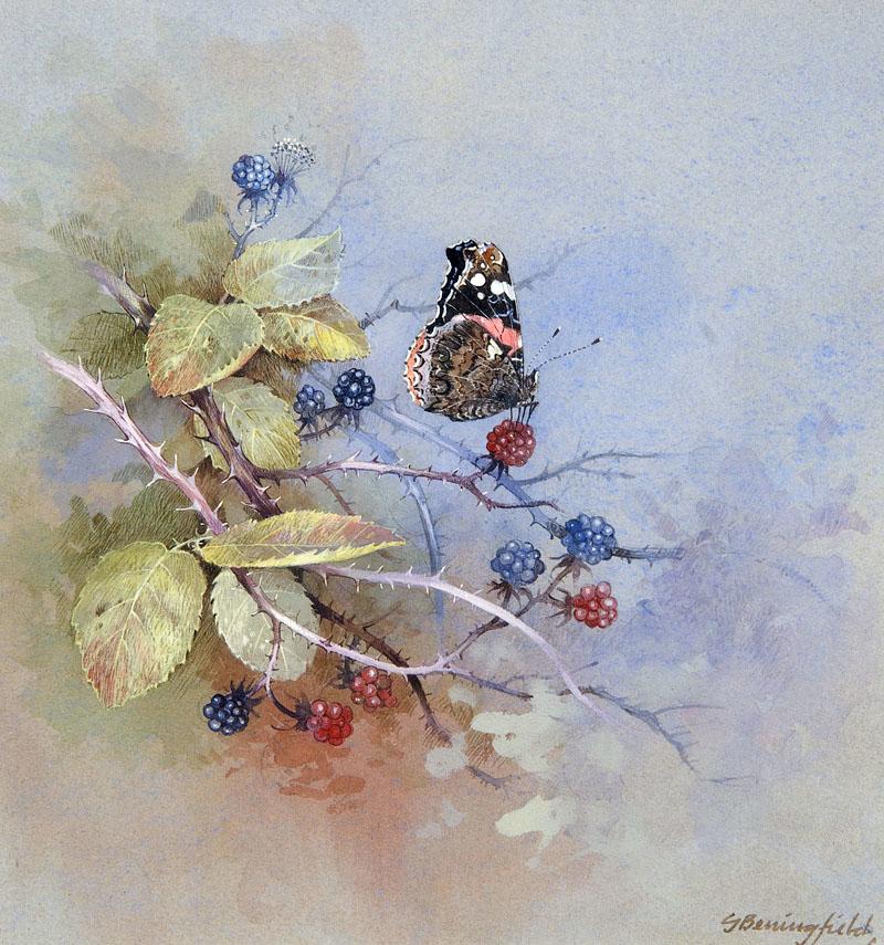 Мир Бабочек Бенингфилда, фото № 16