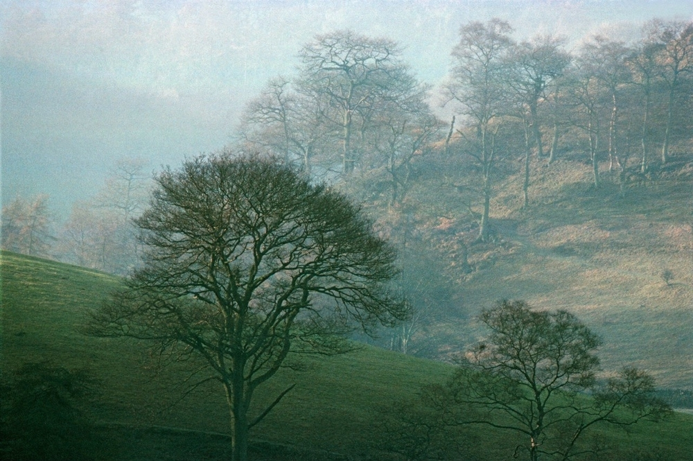 Загадочные портреты деревьев фотографа Frank Horvat, фото № 12