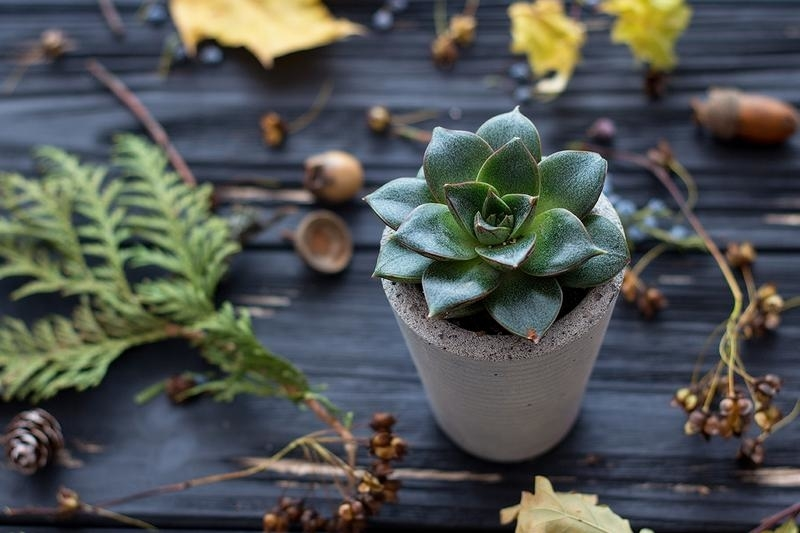 Beauty and Simplicity: 36 Interior Ideas with Succulents, фото № 24