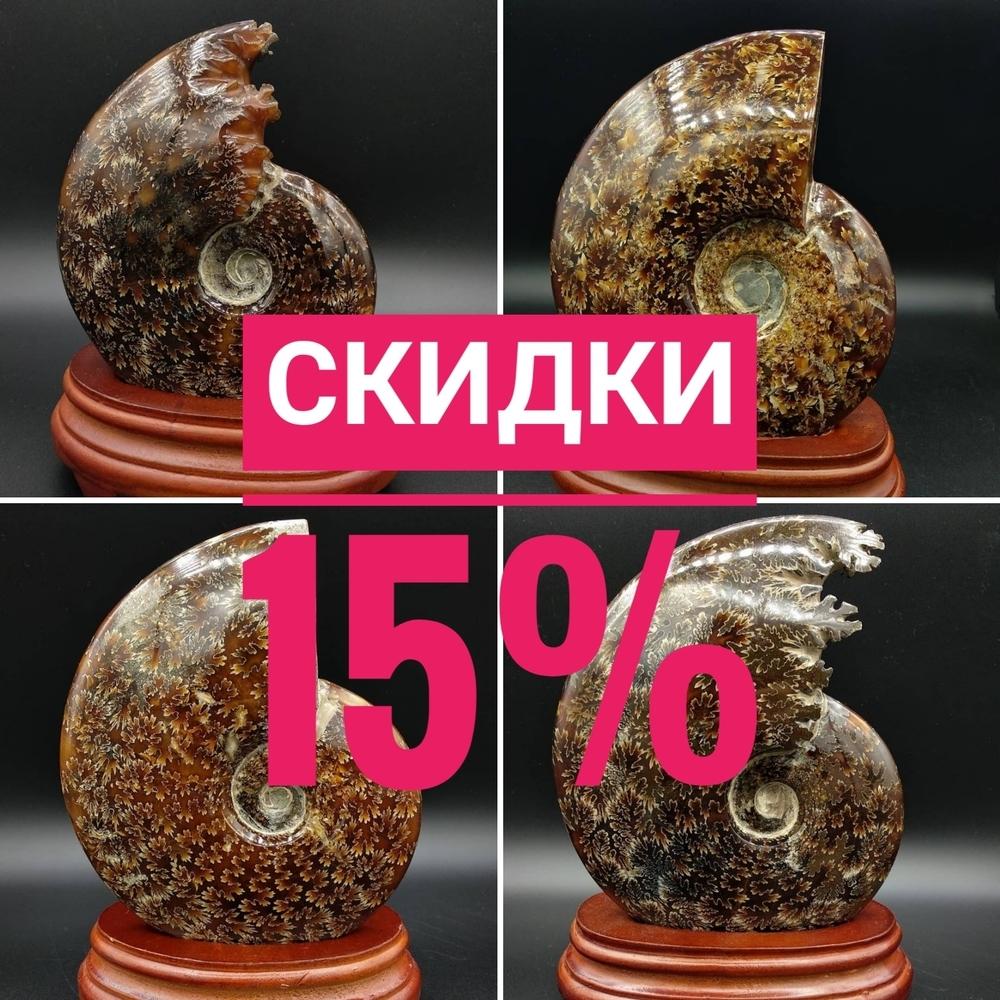 Скидка 15% на весь ассортимент аммонитов до 06.09.19, фото № 1