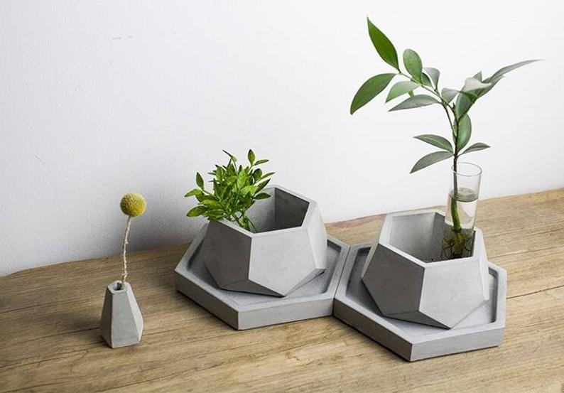 Beauty and Simplicity: 36 Interior Ideas with Succulents, фото № 26
