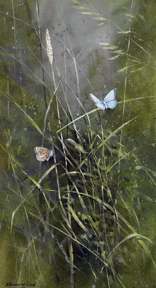 Мир Бабочек Бенингфилда, фото № 26
