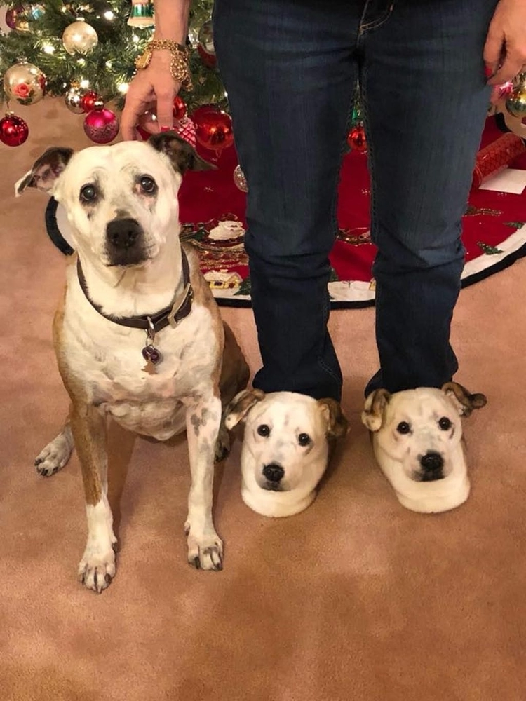 Cuddle Clones Launched Sales Hit: Home Slippers Which Are Copies Of Pets, фото № 7