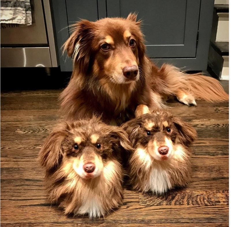 Cuddle Clones Launched Sales Hit: Home Slippers Which Are Copies Of Pets, фото № 21