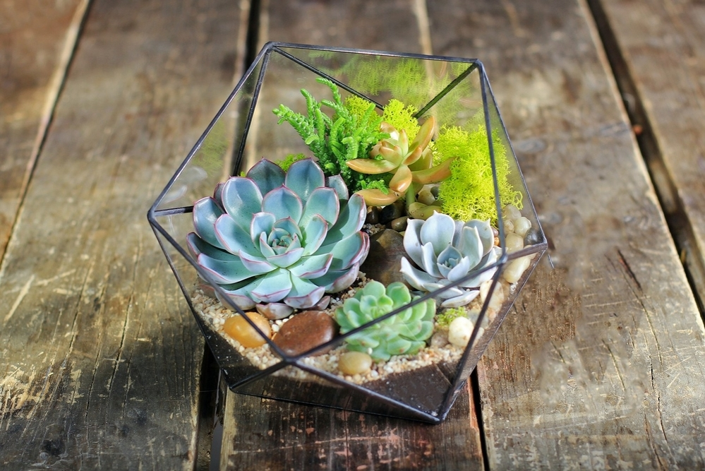 Beauty and Simplicity: 36 Interior Ideas with Succulents, фото № 16