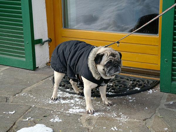Одежда для собак своими руками 7 мастер-классов + много полезного!, фото № 10