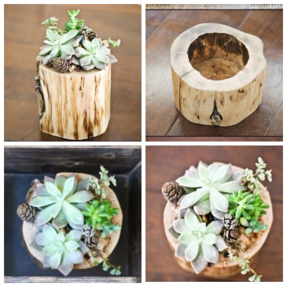 Beauty and Simplicity: 36 Interior Ideas with Succulents, фото № 21
