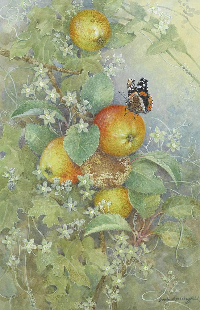 Мир Бабочек Бенингфилда, фото № 23