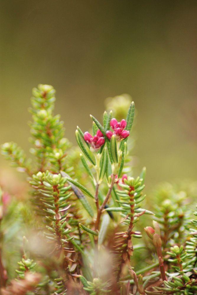 флора, красители, полезные растения, макросъемка, туризм