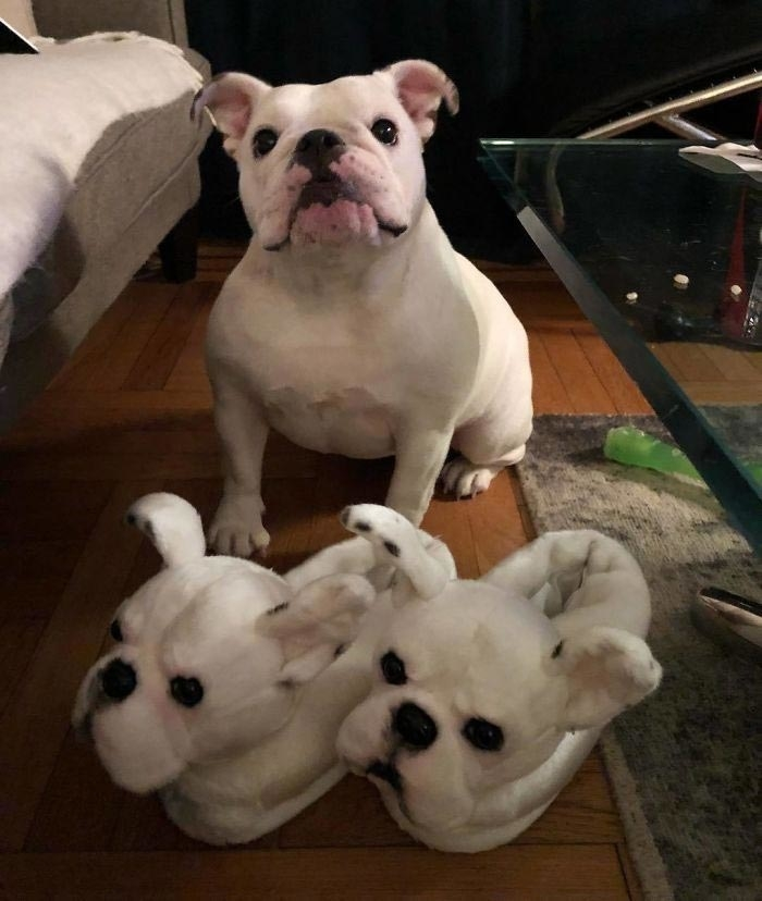 Cuddle Clones Launched Sales Hit: Home Slippers Which Are Copies Of Pets, фото № 26