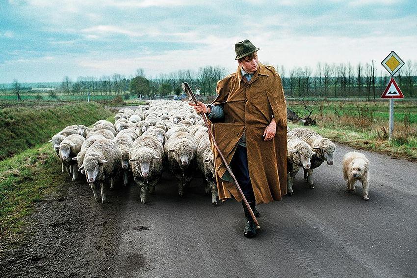 Мы с тобой одной крови 35 невероятных кадров из жизни людей и животных от легендарного фотографа Стива МакКарри, фото № 9