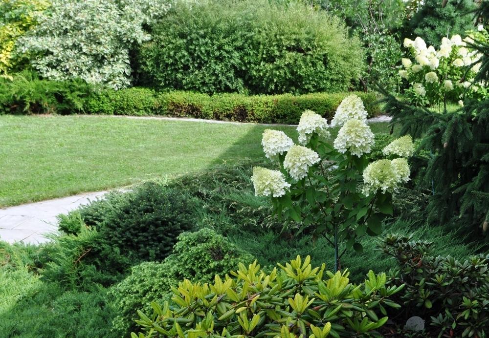 Прогулка по саду в начале августа, фото № 3
