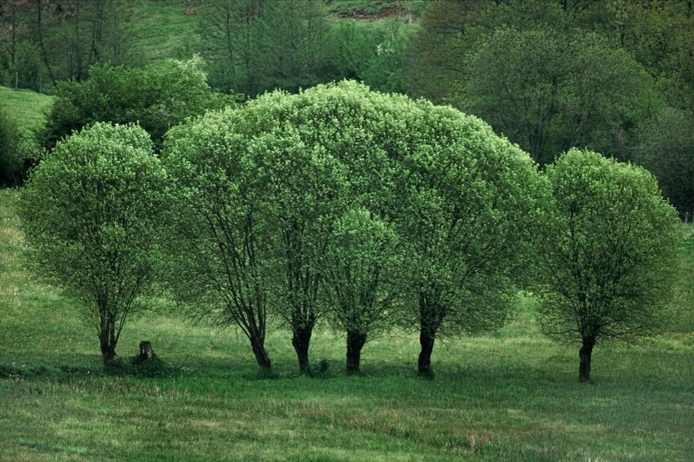 Загадочные портреты деревьев фотографа Frank Horvat, фото № 2