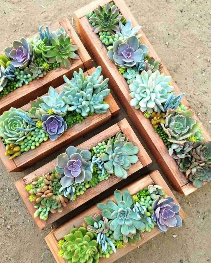 Beauty and Simplicity: 36 Interior Ideas with Succulents, фото № 20