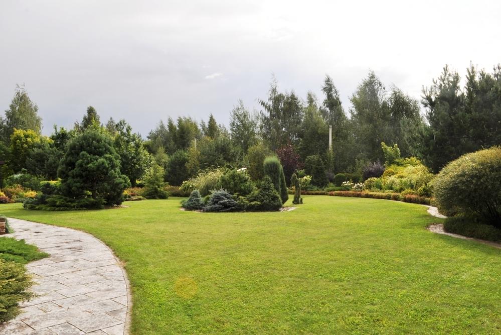 Прогулка по саду в начале августа, фото № 11