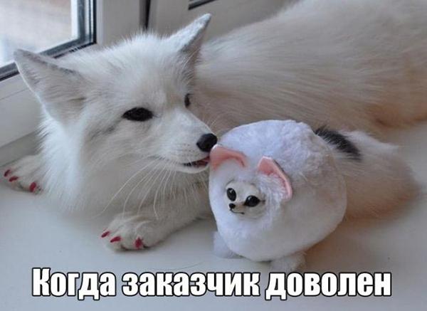Заказчик (не) доволен: 35 лучших мемов о самых искренних эмоциях, фото № 8