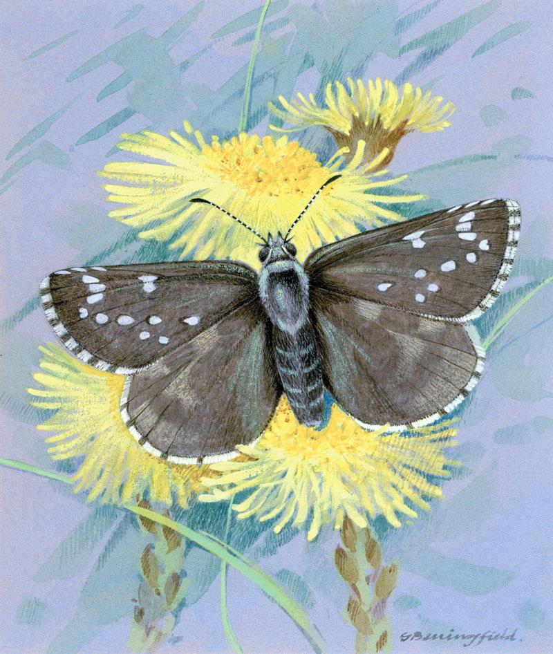Мир Бабочек Бенингфилда, фото № 13