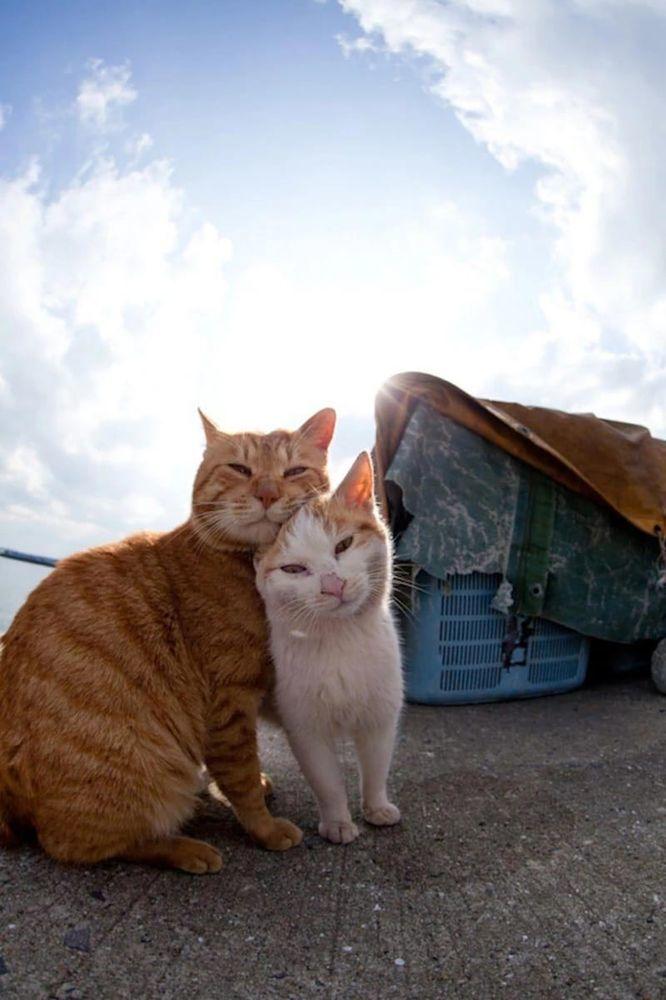 остров котов япония