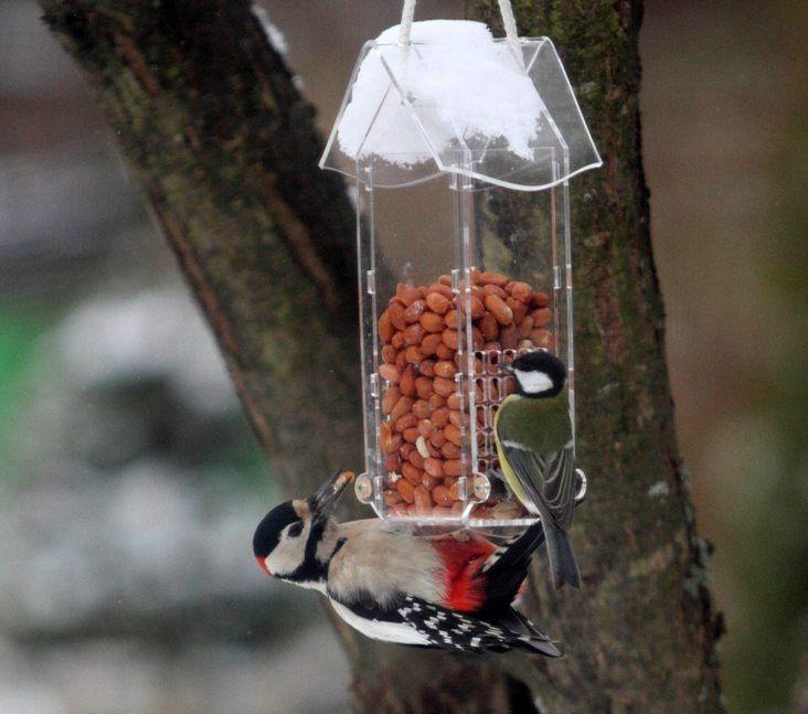 кормим птиц, арахис для птиц