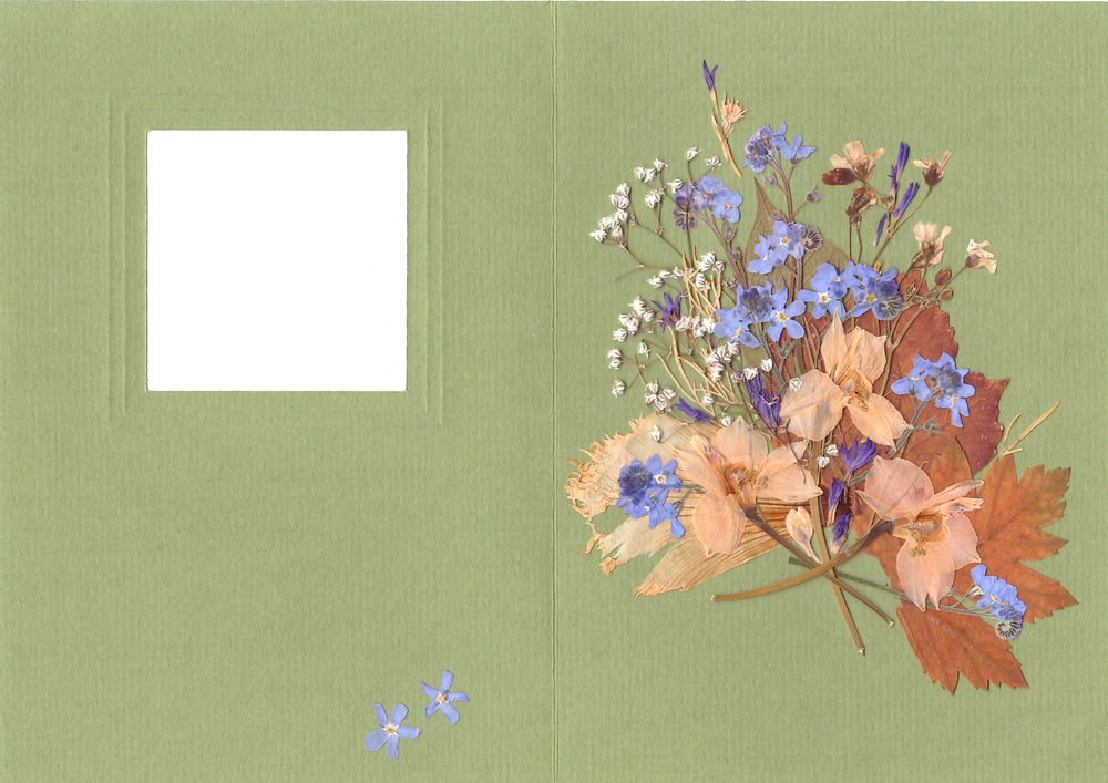 Creating Card in ''Pressed Floristry'' Technique, фото № 1
