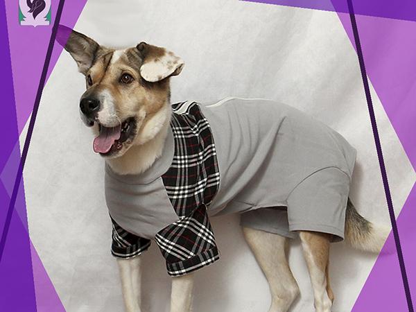 Одежда для собак своими руками 7 мастер-классов + много полезного!, фото № 2