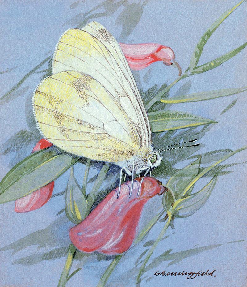 Мир Бабочек Бенингфилда, фото № 19