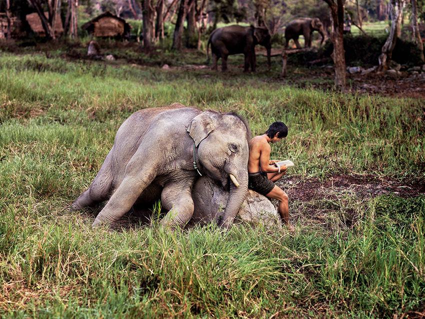 Мы с тобой одной крови 35 невероятных кадров из жизни людей и животных от легендарного фотографа Стива МакКарри, фото № 3