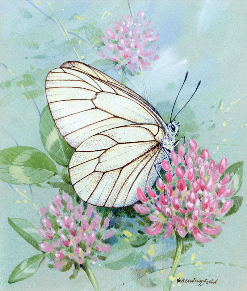 Мир Бабочек Бенингфилда, фото № 14