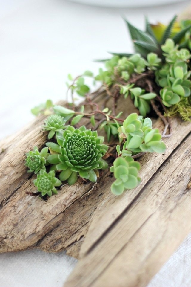 Beauty and Simplicity: 36 Interior Ideas with Succulents, фото № 23