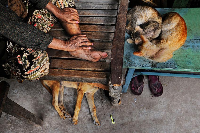 Мы с тобой одной крови 35 невероятных кадров из жизни людей и животных от легендарного фотографа Стива МакКарри, фото № 22
